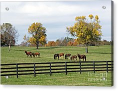 Bluegrass Autumn Acrylic Print by Roger Potts