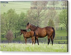 Bluegrass Family - D002766 Acrylic Print