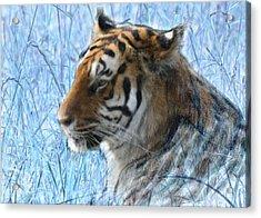 Bluegrass Tiger Acrylic Print