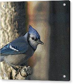 Bluejay Digitally Enhanced Acrylic Print by Ernie Echols