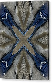 Bluejay Feathers Acrylic Print