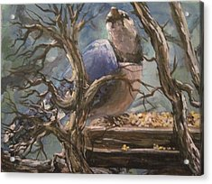Acrylic Print featuring the painting Bluejay by Megan Walsh