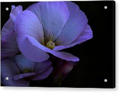 Bluepink Acrylic Print by Ivete Basso Photography