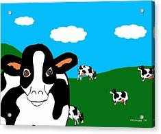 Bluesky Cows Acrylic Print