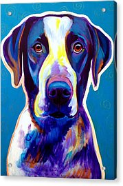 Bluetick Coonhound - Berkeley Acrylic Print by Alicia VanNoy Call