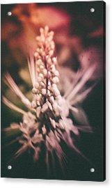 Blured Bloom Acrylic Print