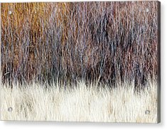 Blurred Brown Winter Woodland Background Acrylic Print by Elena Elisseeva