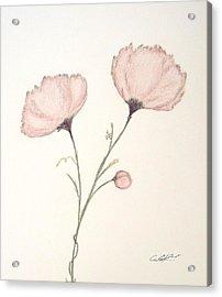 Blush Peonies Acrylic Print by Christine Corretti