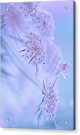 Blushing Bride Acrylic Print by Annette Hugen
