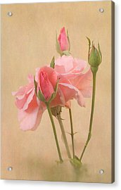 Blushing Pink Acrylic Print by Angie Vogel