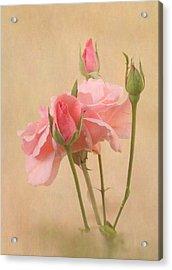 Blushing Pink Acrylic Print