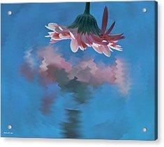 Blushing Pink Bloom Acrylic Print