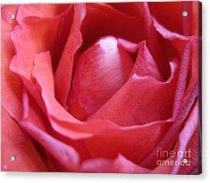 Blushing Pink Rose Acrylic Print