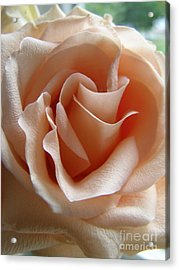 Acrylic Print featuring the photograph Blushing Rose by Margie Amberge