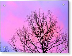 Acrylic Print featuring the photograph Blushing Sky by Candice Trimble