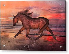 Boasting Beautiful Acrylic Print