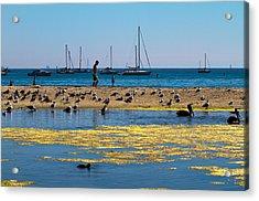 Boats And Birds Acrylic Print by Bernard  Barcos