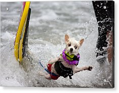 Acrylic Print featuring the photograph Bobby Gorgeous Wipes Out by Nathan Rupert