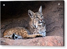 Acrylic Print featuring the photograph Hmm What To Do by Elaine Malott
