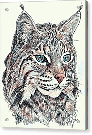 Acrylic Print featuring the drawing Bobcat Portrait by VLee Watson