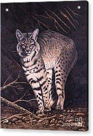 Bobcat Acrylic Print by Ricardo Chavez-Mendez