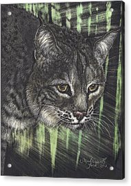 Bobcat Watching Acrylic Print by Stephanie Ford