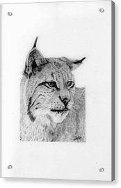 Bobcat Acrylic Print by Wendy Brunell