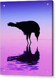 Body Double Acrylic Print