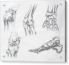 Body Parts Anatomy Study Acrylic Print