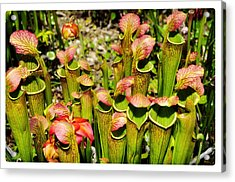 Bog Garden 2 Acrylic Print by Davina Washington