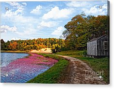 Acrylic Print featuring the photograph Bog by Gina Cormier