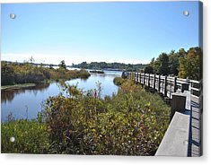 Boggy Bayou Nature Trail Acrylic Print by Michele Kaiser