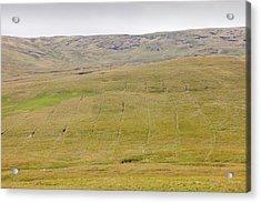 Boggy Moorland Above Wet Sleddale Acrylic Print