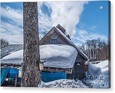Boiling The Sap Acrylic Print by Alana Ranney