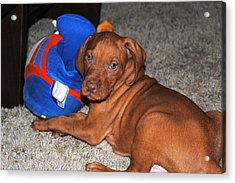 Acrylic Print featuring the photograph Boise State Fan by Jessica Tookey