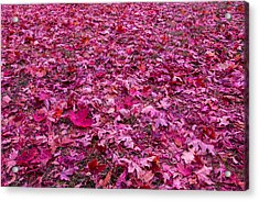 Pink Leaves Acrylic Print by Abdullah Alnassrallah