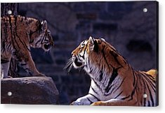 Bonding Acrylic Print by Skip Willits