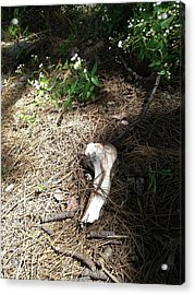 Bone Acrylic Print by Erika Chamberlin