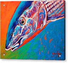 Bonefish Closeup Acrylic Print by Savlen Art