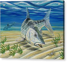 Bonefish On The Flats Acrylic Print