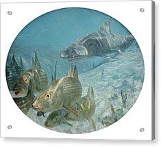 Bonefish Pursued By A Shark, 1972 Acrylic Print