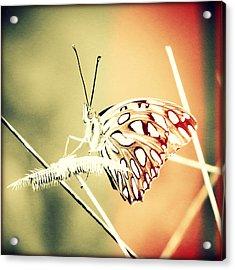 Bonita Beach Butterfly Sunset Acrylic Print by Chris Andruskiewicz