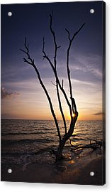 Acrylic Print featuring the photograph Bonita Beach Tree by Bradley R Youngberg