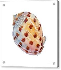 Bonnet Shell Acrylic Print