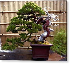 Bonsai Tree And Bamboo Fence Acrylic Print by Elaine Plesser