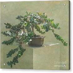 Bonsai Tree Acrylic Print