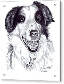 'border Collie' Acrylic Print by Barb Baker