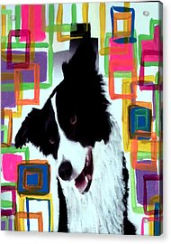 Border Collie Acrylic Print by Char Swift