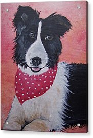 Border Collie Acrylic Print by Leslie Manley