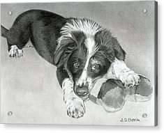 Border Collie Puppy Acrylic Print by Sarah Batalka